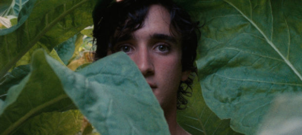 Happy As Lazzaro (Lazzaro Felice)